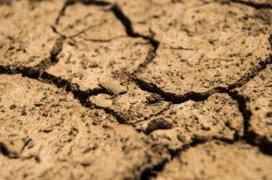 no soil erosion